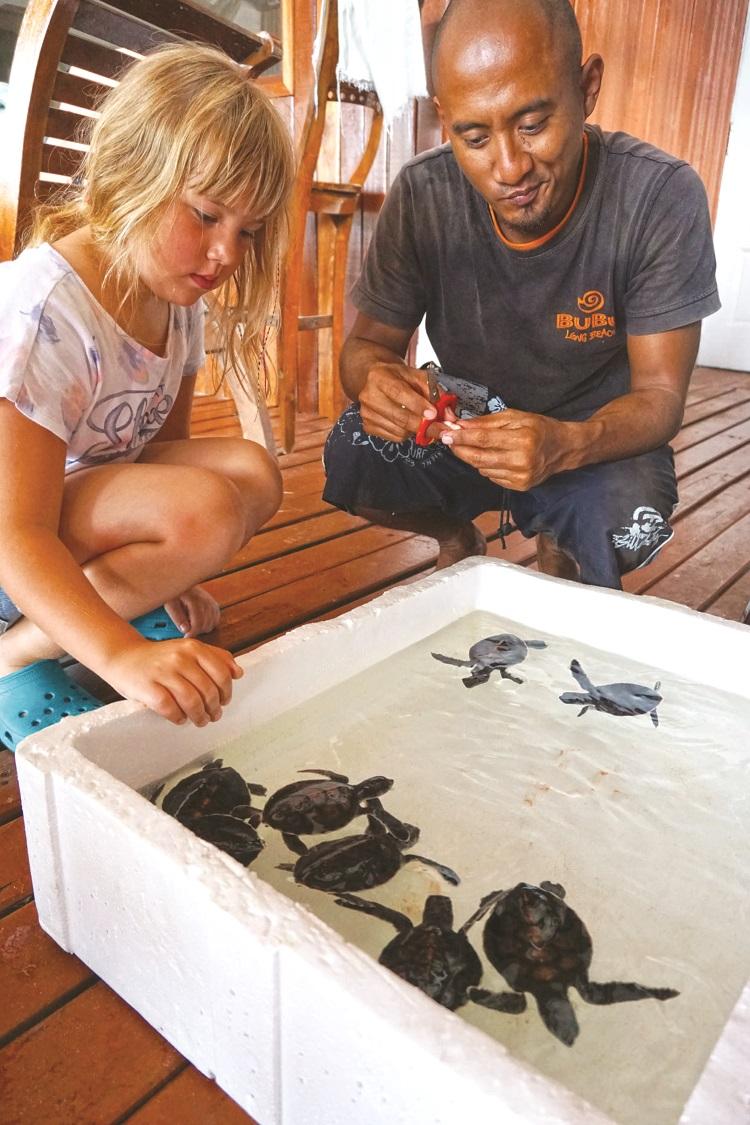 小孩静静地看着可爱的小海龟,等待给它们喂食。