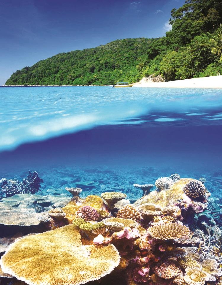 水下的珊瑚群展现多种风采,需要靠大家的努力保护才能维持这般绝色美景。