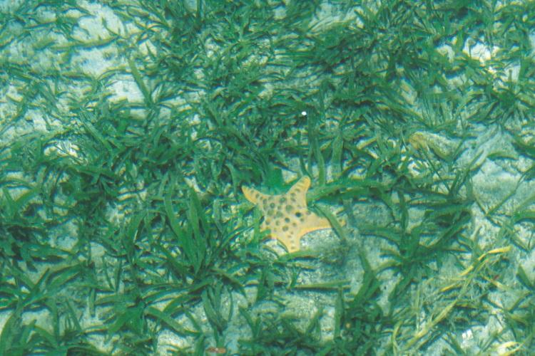 站在桥上清晰可见海底的海胆和海星(一)。