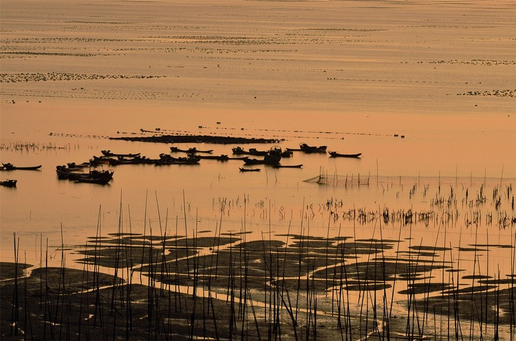随着日落,广阔的滩涂在晚霞照耀下,和竹竿、船只共同塑造出美丽的景象。