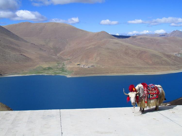 要不是群峦,湛蓝的湖水几乎和天空连上了。浓妆艳抹的牦牛正等着和游客拍照!
