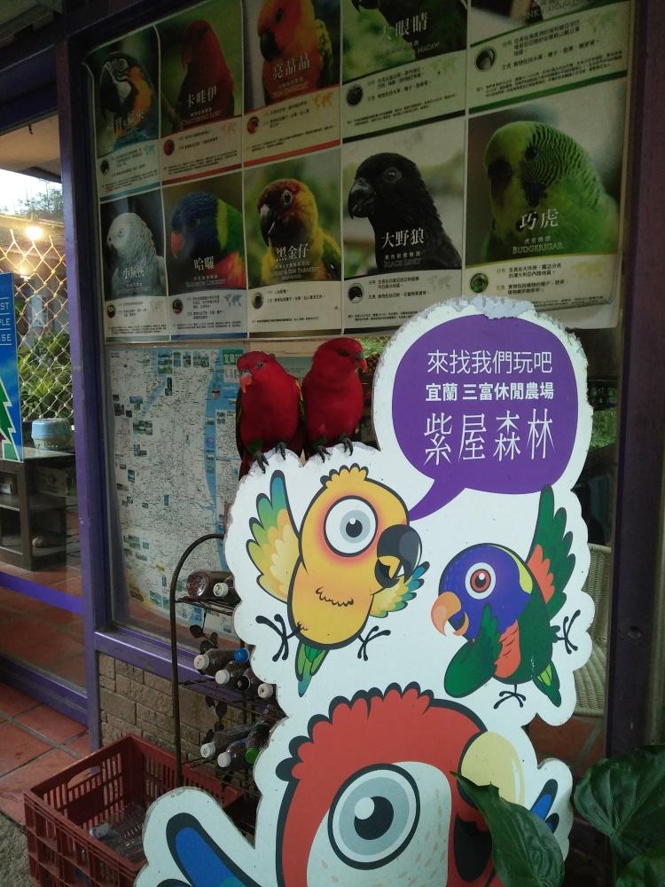 这里的动物和鸟类都充满灵性,包括会说话的鹦鹉。