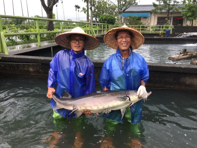 黄玉明(右)两父子,以无限热情融化了冷水鱼,创造香鱼奇迹。