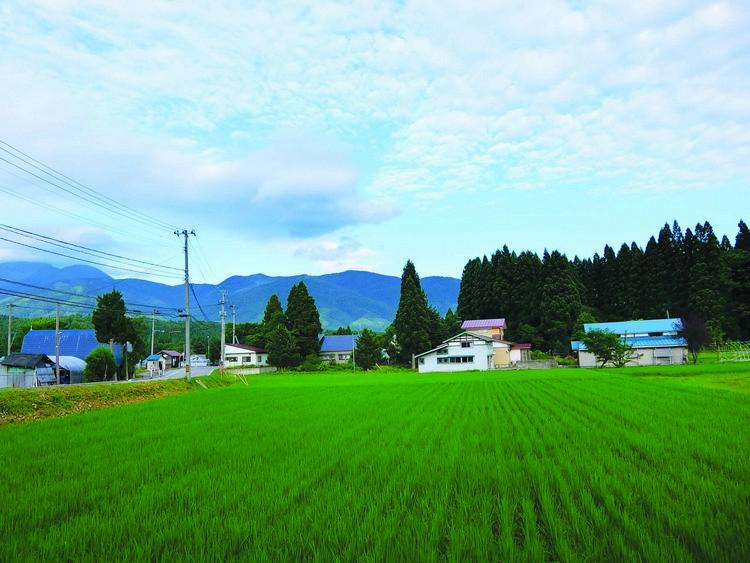 我们入住的民宿外是一大片稻田,景色非常漂亮。