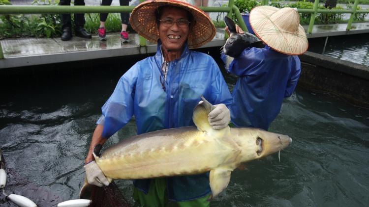 """""""到鱼场巡逻,鱼儿一天天长大,那种心情就是快乐"""""""