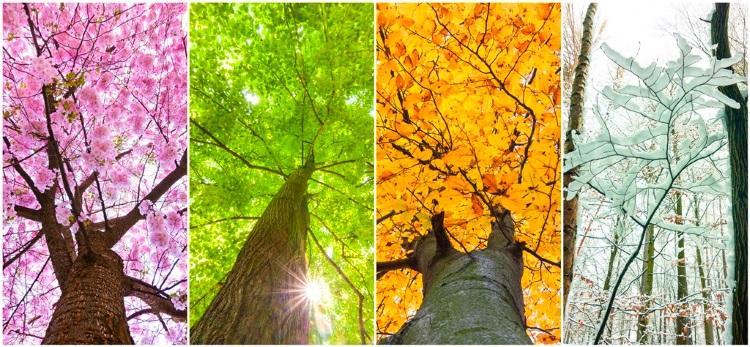 日本の四季交响曲