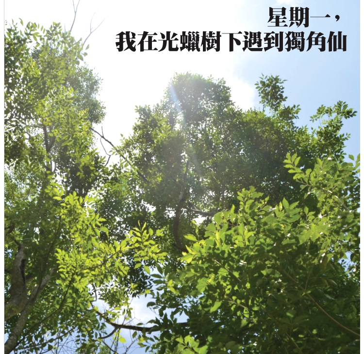 光蜡树上一道道垂直的结痂疤痕,是独角仙汲取光蜡树树皮下的树液后,留下来的痕迹。