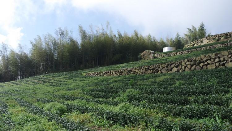龙云休闲农场海拔高约1500公尺,在青葱绿意的环绕下让人心旷神怡。