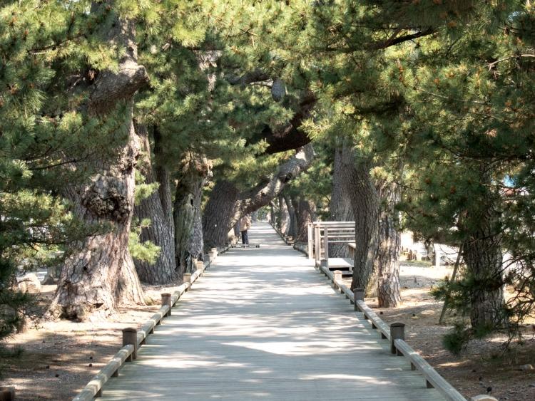"""神之道 在御穗神社与三保之松原之间,是由一条长约500米长的路链接着,这条路就叫做""""神之道""""。"""