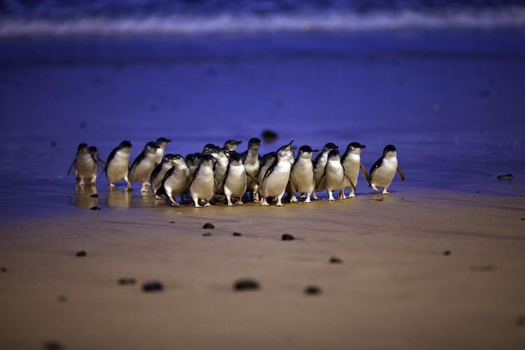 来,一起在优先座以最佳视觉角度等待企鹅归队!