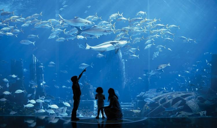 位于亚特兰蒂斯棕榈酒店中的失落的庭院,是以传说中的亚特兰蒂斯作为展示主题的水族馆。