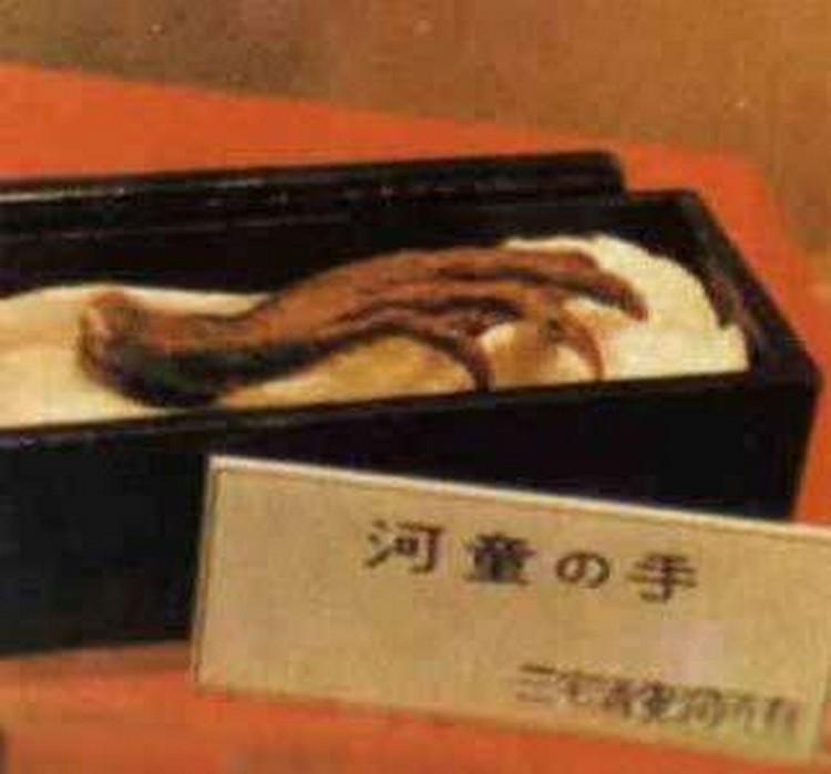这木乃伊据称是河童的手。