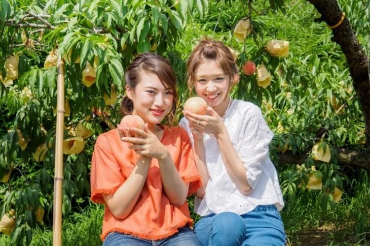 现采白桃 7月上旬至8月下旬是冈山白桃盛产期,现采先吃广受欢迎。