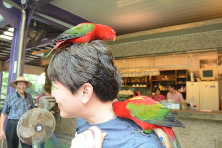 热情的鹦鹉献吻,却吓得朋友惊叫连连。
