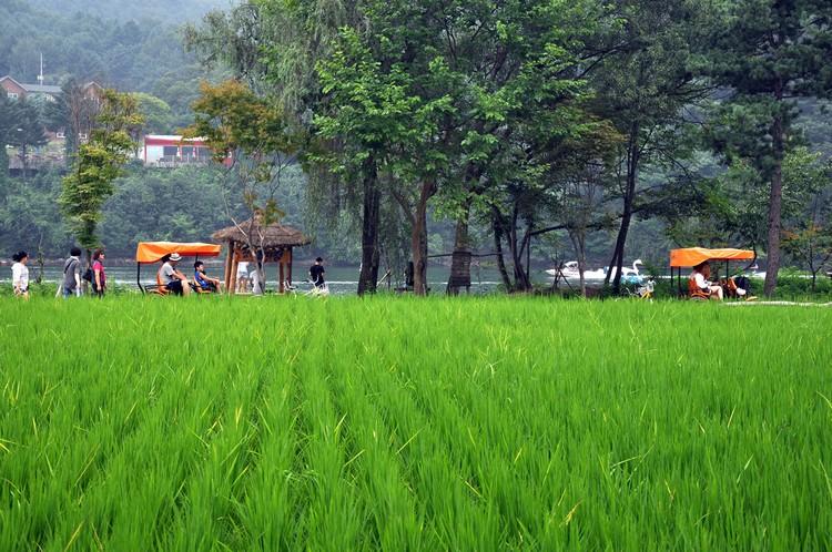 游人漫步骑车在田地间,让自己投入于大自然的怀抱里。