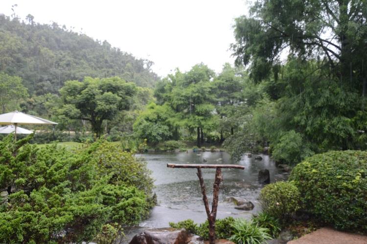 绿意盎然的庭院池畔,都是鹦鹉翱翔的空间。