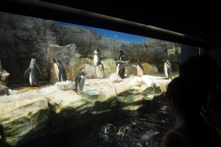 南极大陆的企鹅,就这样,你看我,我看你。