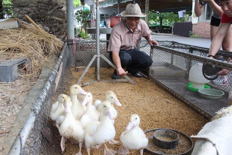 台南鸭庄休闲农场的场长苏清发:鸭子啊,吃东西啦~(设计对白)