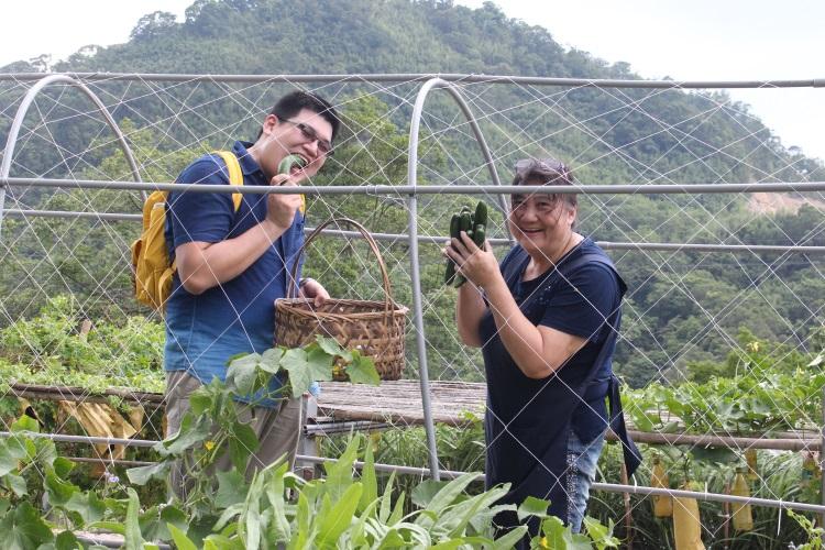 卓妈妈(右)在卓也小屋的有机菜园一边摘黄瓜,一旁的卓子络(左)则一边啃咬清脆爽口的黄瓜。