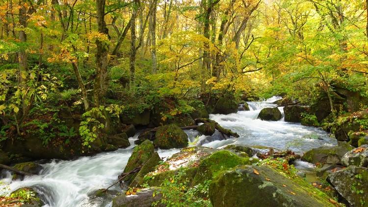 奥入濑溪流人气最高的景点-- 阿修罗急流