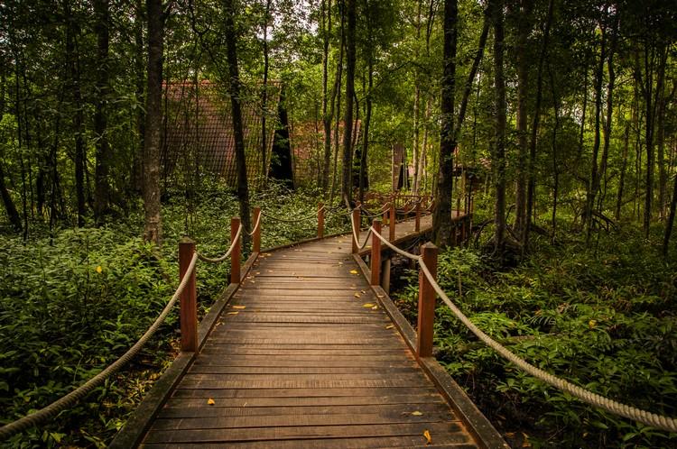 红树林公园建有渡假屋。