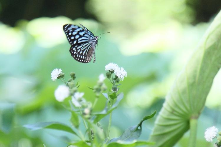 蝴蝶生态区里的蝴蝶