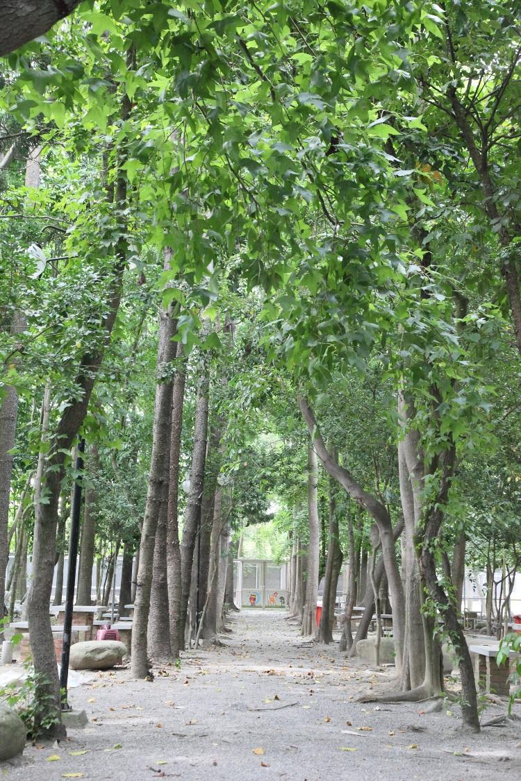 野餐区高壮的树木整齐列队