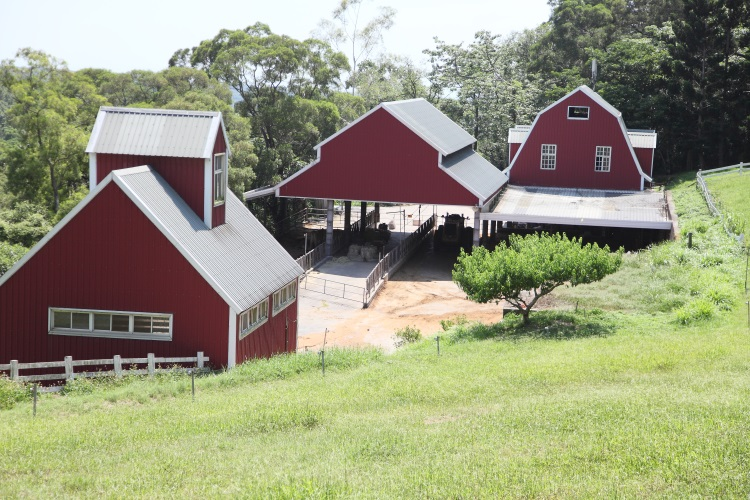 飞牛牧场牛妈妈的家