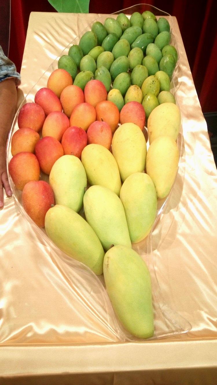 铺满各品种芒果的台湾地图!