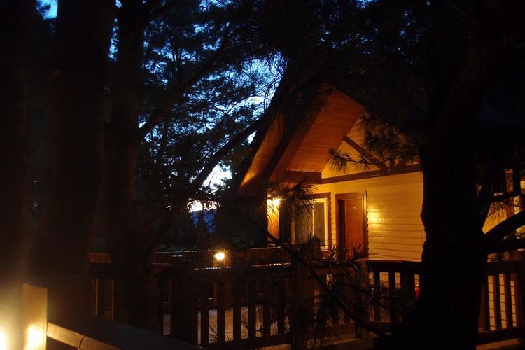 暖黄的灯亮起,大树与小屋,别有一番浪漫。