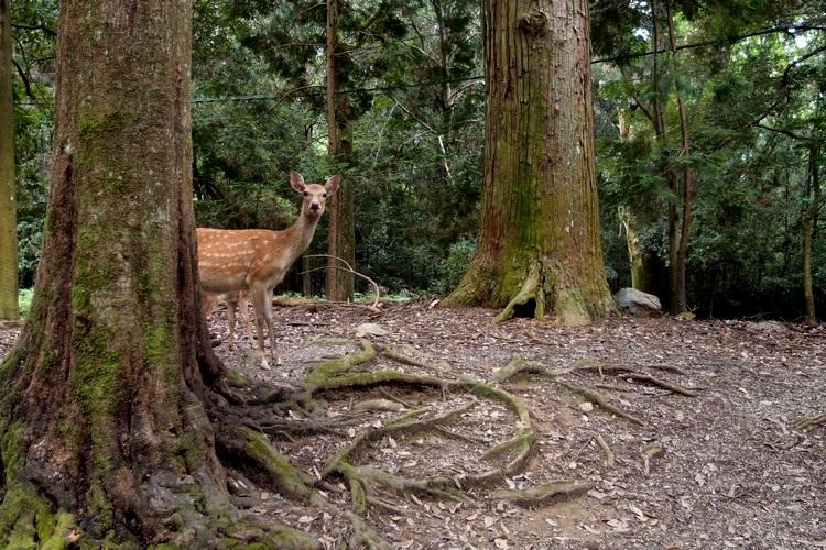 有些游走在神秘般的绿林间...
