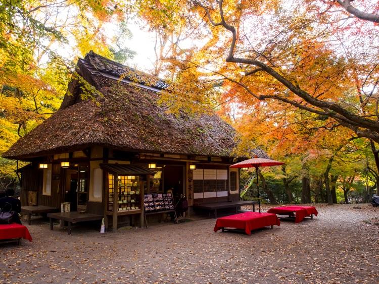 """秋天的奈良也是赏枫的最佳境地。这是改建自大正年代茅葺屋柱的""""水谷茶屋"""",秋天,可坐在户外,欣赏一幅唯美景色。"""