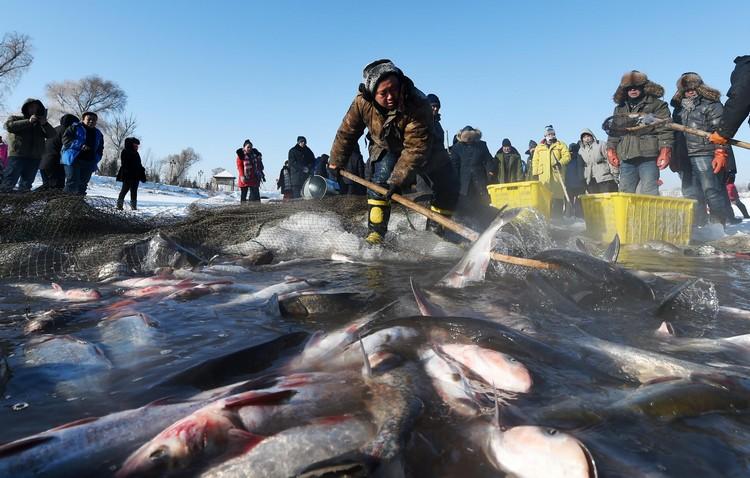 因为湖的生态条件优厚,让鱼每年的产量惊人,在2008年更捕得168,000公斤的渔获而被列入《吉尼斯世界纪录大全》之中!
