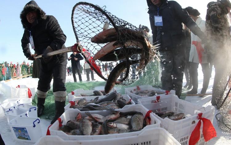 鱼网网孔都遵照传统疏织,因此不但可让体形较小的小鱼穿网而逃,也确保捕上来的都是更具商业和食用价值的大家伙。