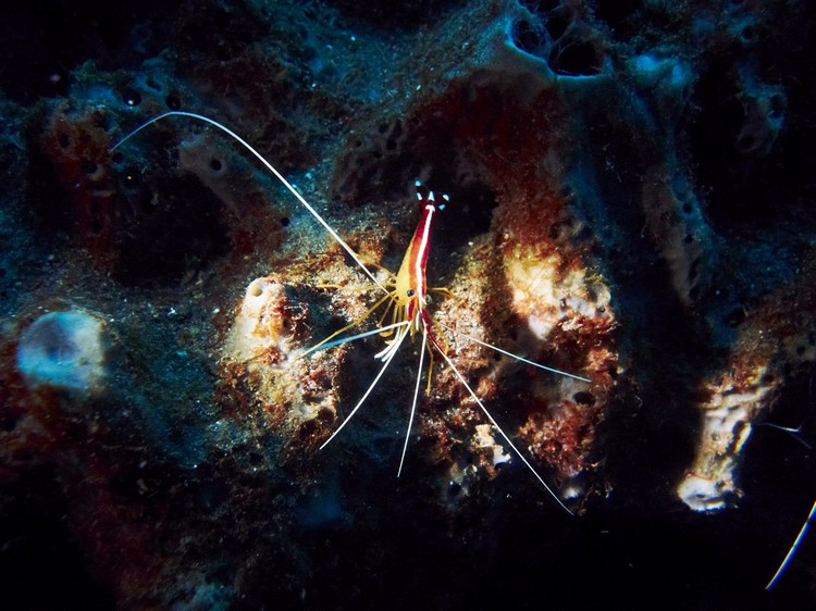 各种新奇的海底生物,正频频想你打招呼。