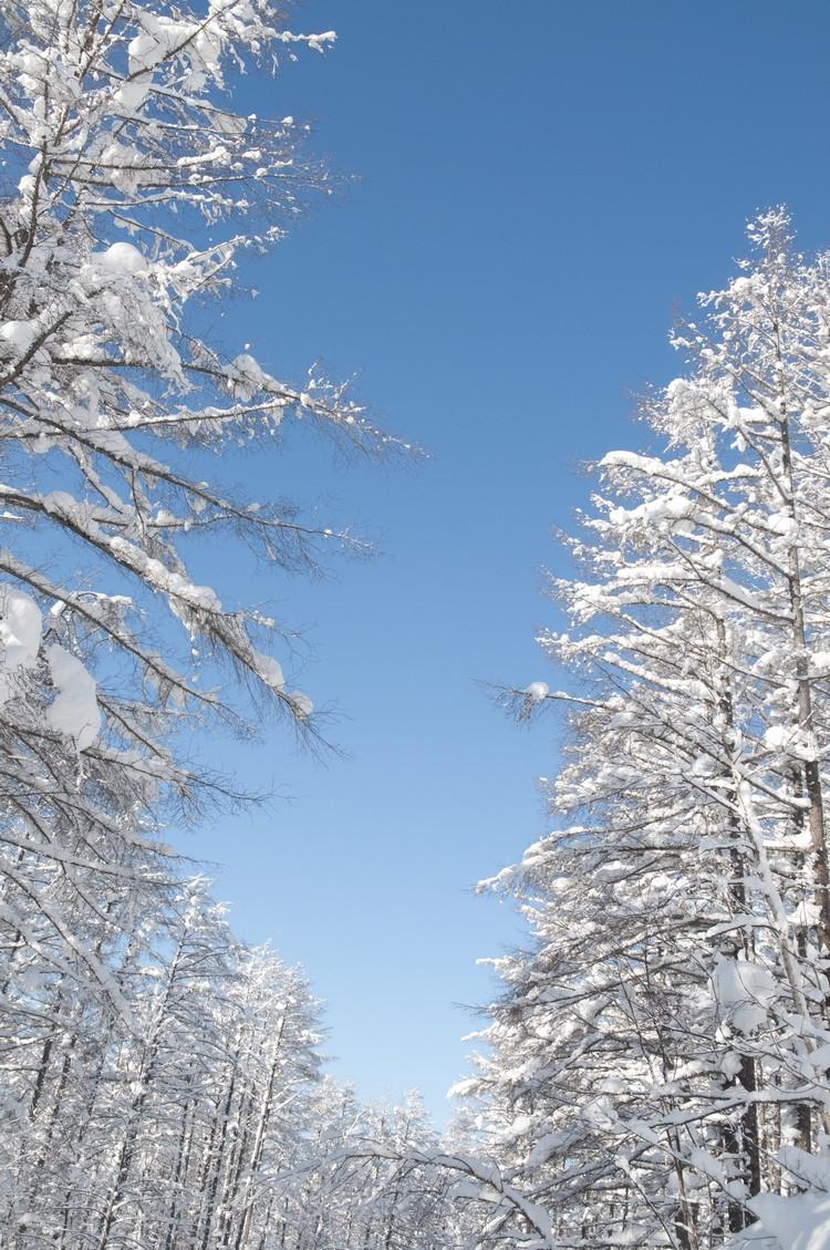 没有繁华之尘埃沾染,雪是白的。