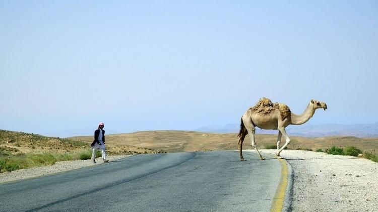 过路的骆驼。