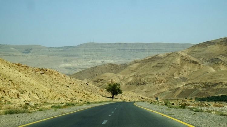路经,皇者之路上的枯树。