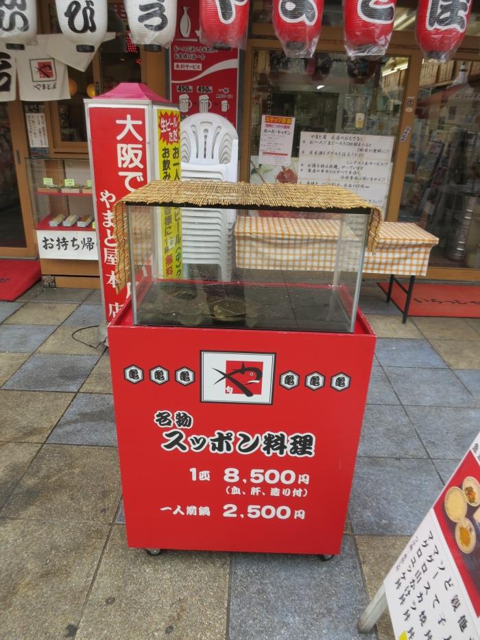 日本也吃鳖,若你也好这一味,不妨一试。