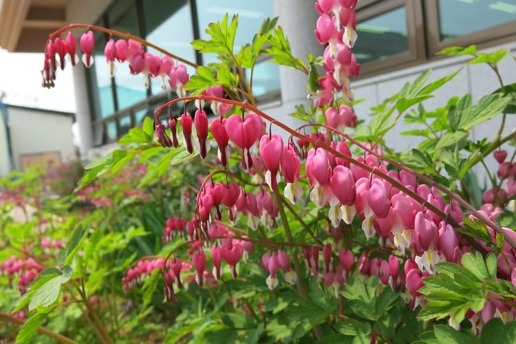 美丽的爱心状花朵。