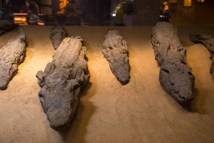 神殿内存有鳄鱼木乃伊供人参观