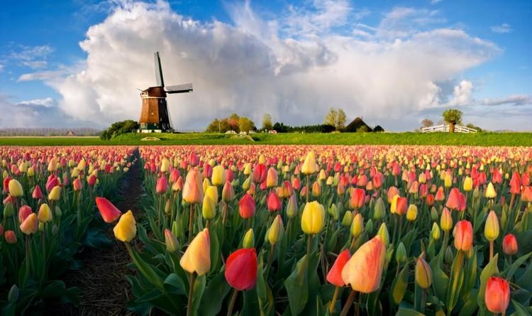 风车之乡--荷兰