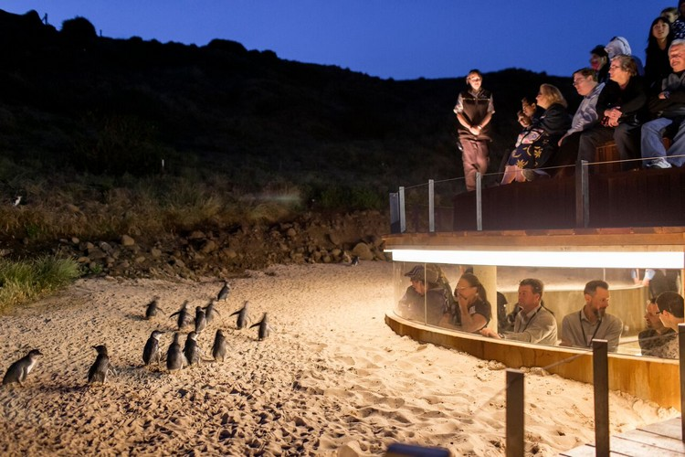 观赏企鹅归巢自然景象