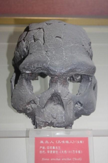 价_世界文化遗产:印尼桑义兰早期人类遗址(SangiranEarlyManSite