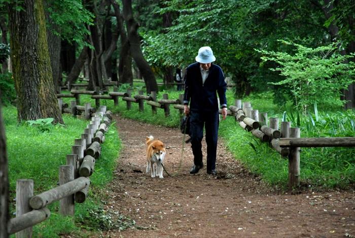 吉祥寺井之头恩赐公园有许多遛狗散步的人