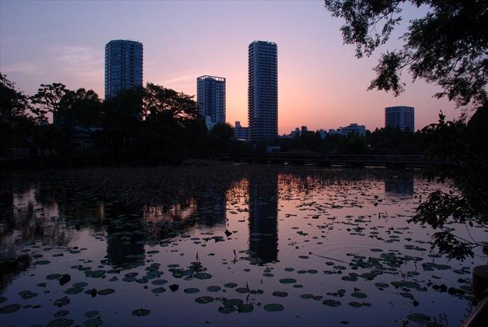 在上野(Ueno)恩赐公园欣赏美丽日落
