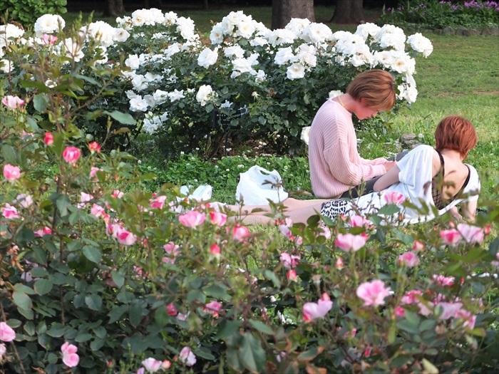 代代木公园的鸟语花香让日本人着迷不已