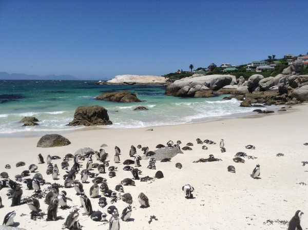 south africa 891