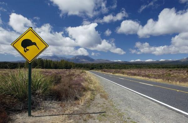10 New_Zealand_AKL_Auckland_Nature2