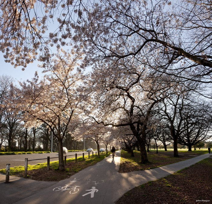 市中心的哈格利公园(Hagley Park)